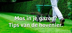 Mos in je gazon? De hovenier geeft tips!