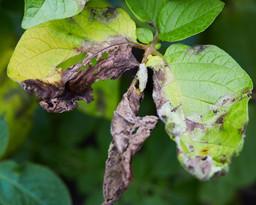 Mijn tuinplant krijgt gele of donkere bladeren... help!