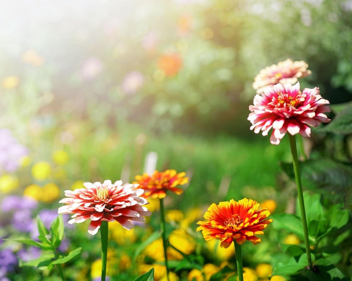 Waarom heeft een plant fosfor nodig?