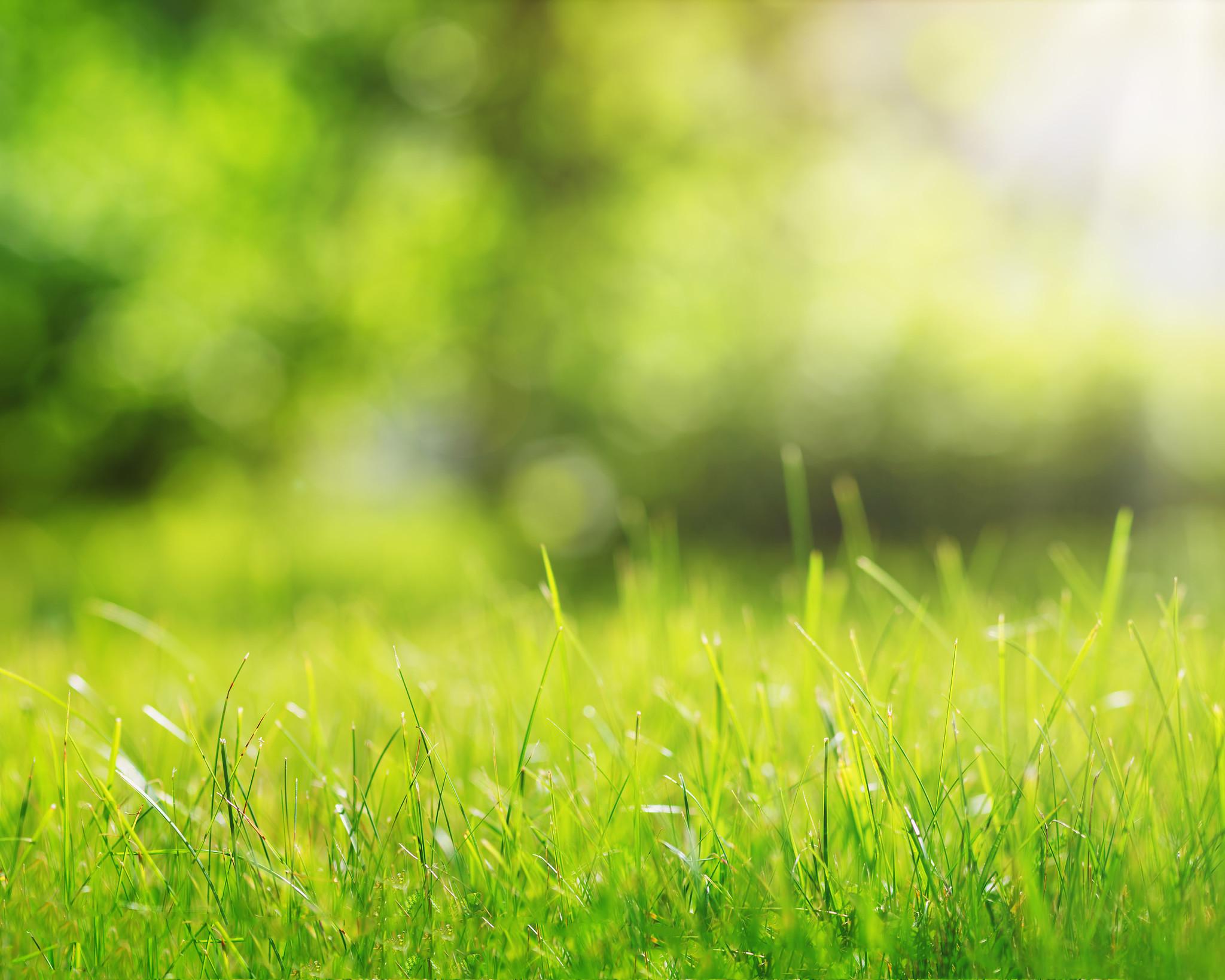 Waarom stikstof goed is voor planten