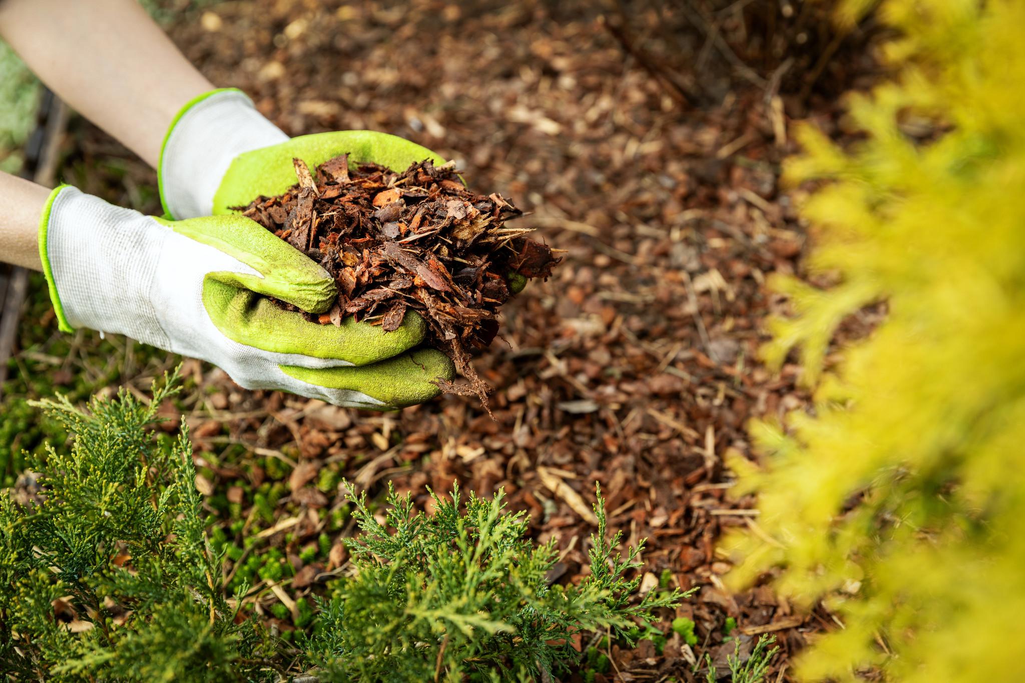 Schapenwol in de tuin gebruiken? Jazeker!