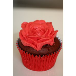 Cupcake Regular Flavours