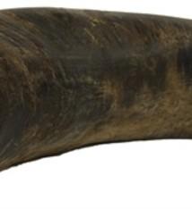Merkloos T-rex met kraakbeen