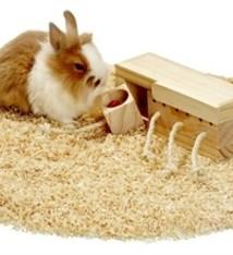 Karlie Karlie rody brain train speelgoed konijn/cavia kubus met 4 blokken