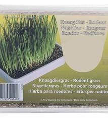 Merkloos Knaagdiergras in plastic box