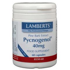 Lamberts Kiefernrindenextrakt (Pycnogenol 40 mg)