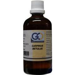 GO Carpinus Betulus