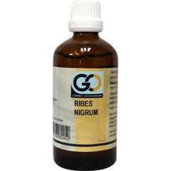 GO Ribes Nigrum