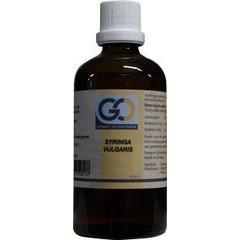 GO Syringa vulgaris