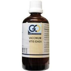 GO Vaccinum vitis idaea