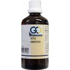 GO Vitis vinifera