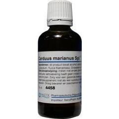 Carduus marianus similiaplex