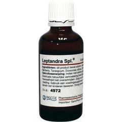 Leptandra Similiaplex