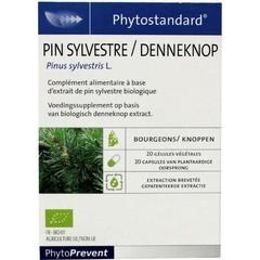 Phytostandard Pine Bud 20 Kapseln.