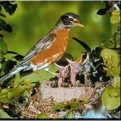 Animal Essences Tieressenzen Robin (Robin) 30 ml