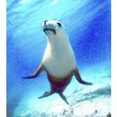 Animal Essences Seal (Siegel) 30 ml