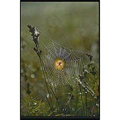Animal Essences Tieressenzen Spinne (Spin) 30 ml