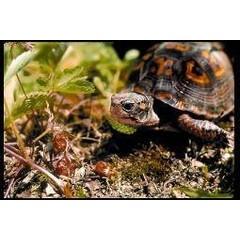 Animal Essences Turtle (Meeresschildkröte) 30 ml