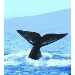 Animal Essences Tieressenzen Wal (Wal) 30 ml
