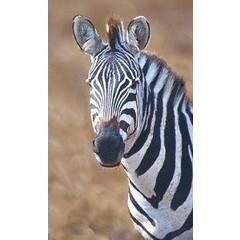 Animal Essences Tieressenzen Zebra 30 ml