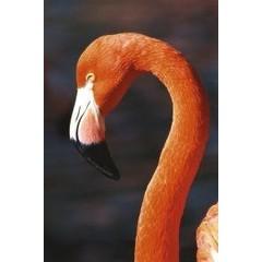 Animal Essences Tieressenzen Flamingo 30 ml