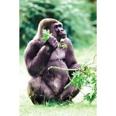 Animal Essences Tieressenzen Gorilla 30 ml