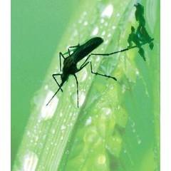Animal Essences Tieressenzen Mücke (Moskito) 30 ml