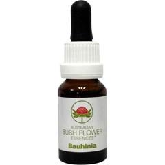 Australian Bush Bauhinia 15 ml