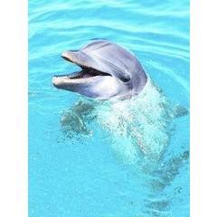 Animal Essences Dolphin (matte Linie) 30 ml