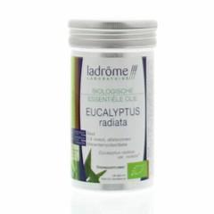 Eukalyptus radiata Öl organisch 10 ml