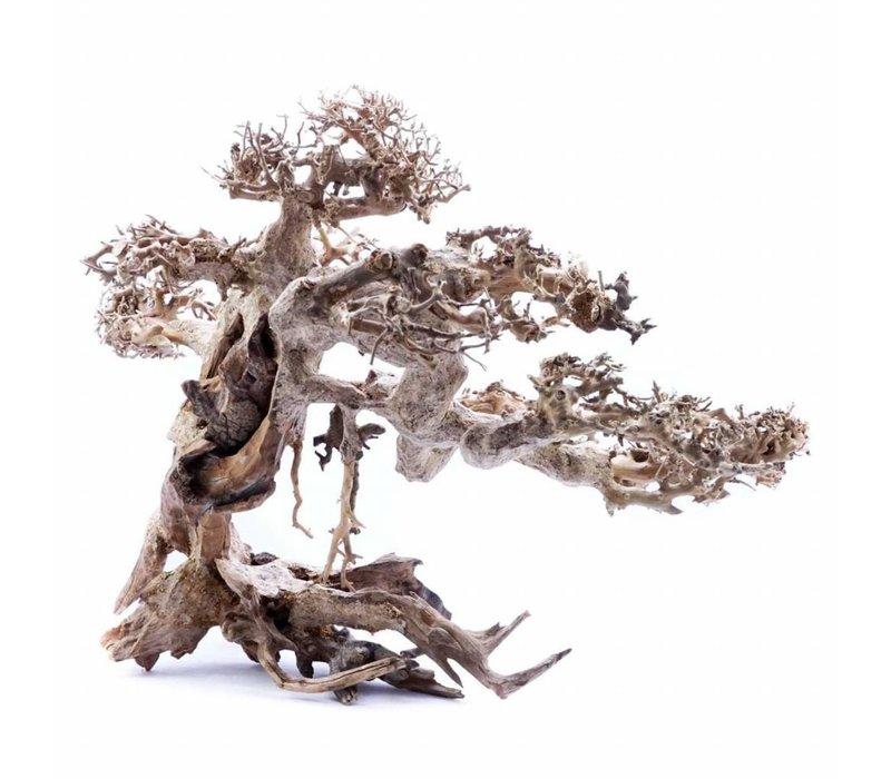 Bonsai Tree Driftwood