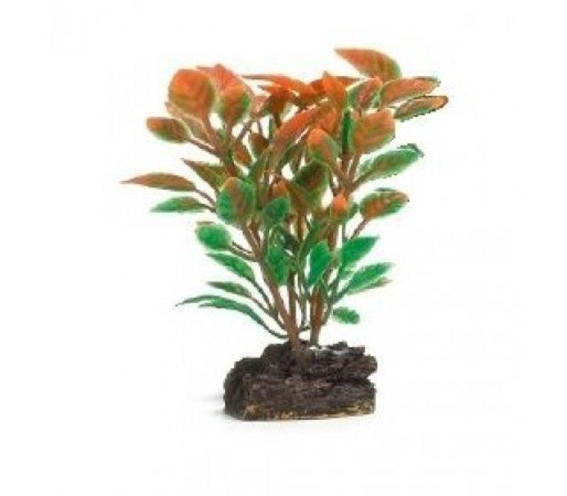 Aqua Plant 1