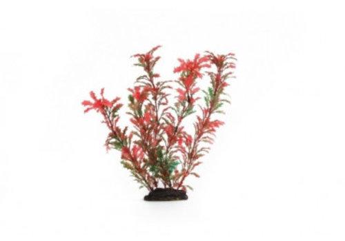 Aqua Plant 7