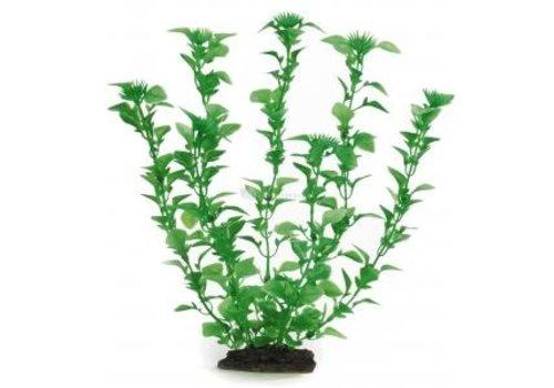 Aqua Plant 8