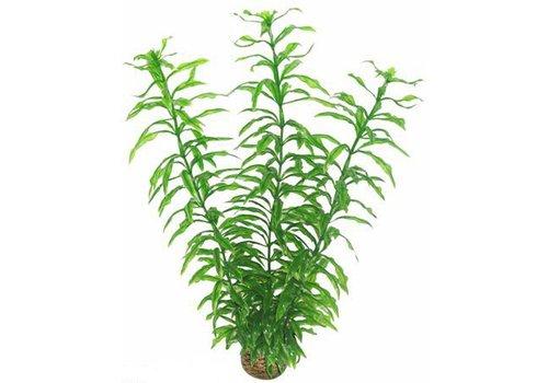Easy Plants Hoog #2