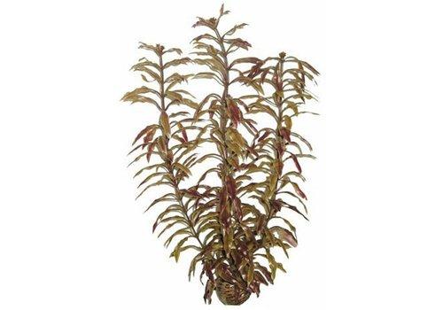 Easy Plants High #3