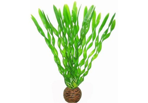Easy Plants Middel #1