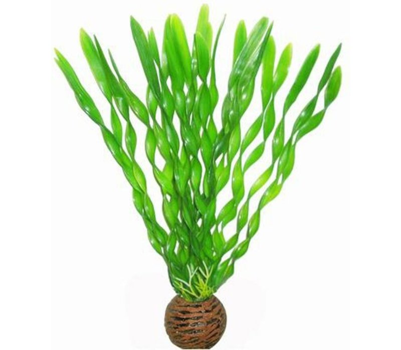 Superfish Easy Plants Medium #1