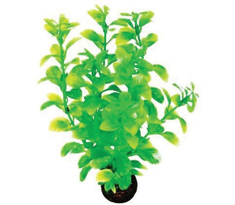 Superfish Easy Plants Middel #2