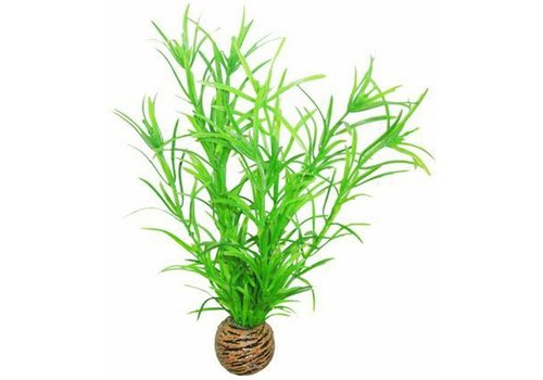 Easy Plants Medium #3