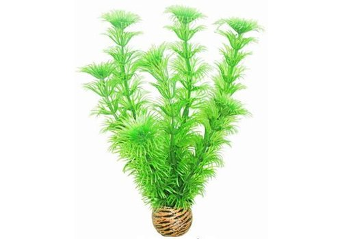 Easy Plants Medium #4