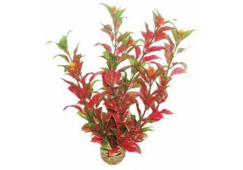 Easy Plants Medium #6
