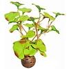 Superfish Easy Plants Voorgrond #1 - Zijde