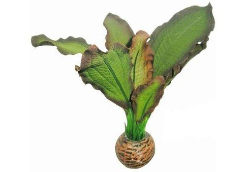 Easy Plants Voorgrond #3 - Zijde