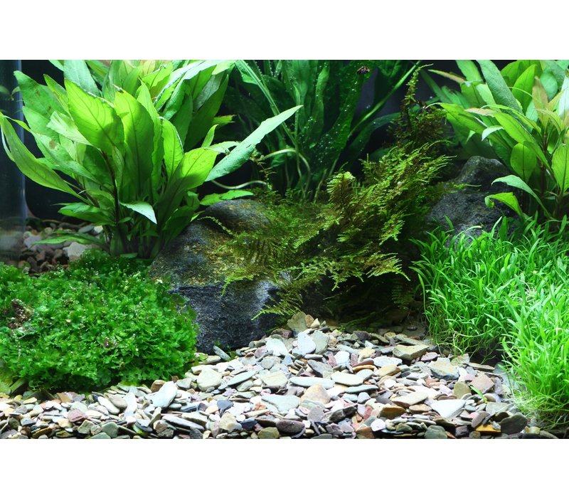 Dennerle Plantahunter Gravel Rio Xingu