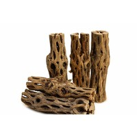 Cholla Wood