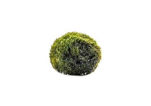 Aquaflora Mosbol