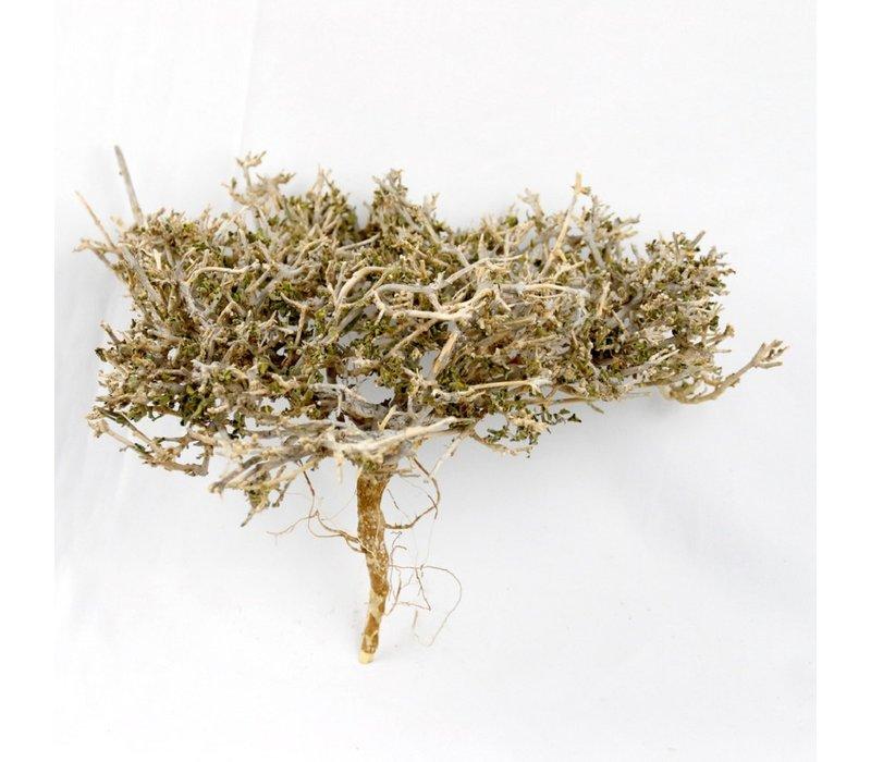 Small Dry Tree