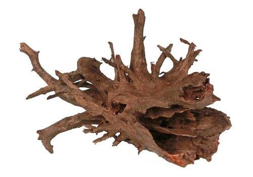 Corbo Root