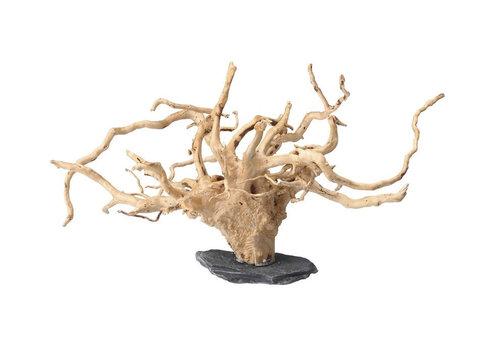 Spiderwood Op Steen